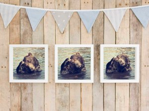 3 little bears lifestyle